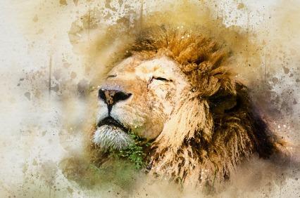 lion-1577197_1920
